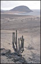 Kaktusy w Pan de Azucar